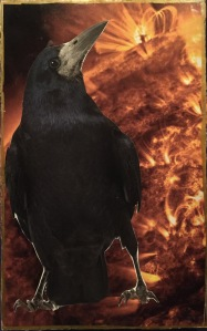 The Watcher Crow